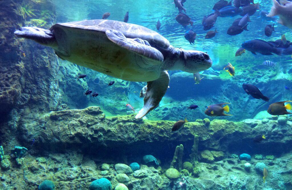 Turtle-Trek-SeaWorld-Orlando